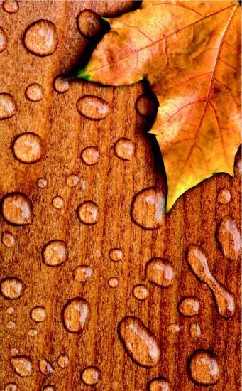 Descopera secretul lemnului bine intretinut